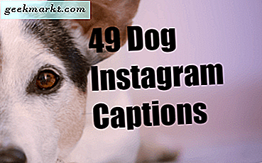 49 Caption to Capture Dog's Personality Anda Sempurna untuk Instagram