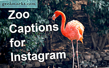 73 Instagram Captions for Zoo